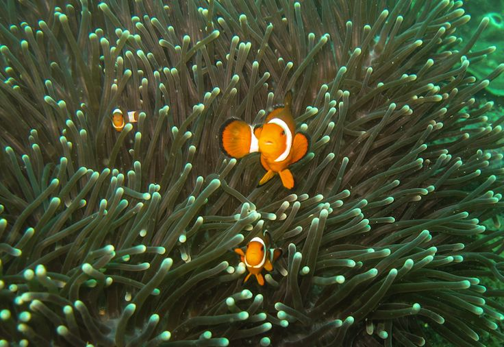 I am trying to #FindNemo ;)