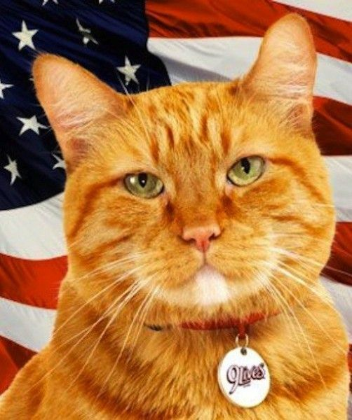 78 Best Boysen Closest Color Match Images On Pinterest: 15 Best Cats Images On Pinterest