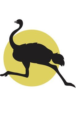 Ostrich (sprints at more than 60 miles per hour)   A Bird Up Close   Kids Discover