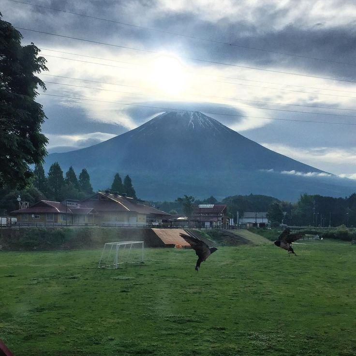 ����+✈️+��+����=�� #富士山 #japan #朝霧高原 今回お世話になったコテージは 富士ミルクランドの横にある ファームイン富士朝霧高原棟です⭐️ 1棟で¥15.000でキッチン、トイレ風呂別2LDKでかなり広々。 目の前には富士山、 コテージにツバメの巣があるので こんな神瞬間な写真が撮れちゃいます���� とってもオススメですよー! #fuji by #D7100 #nikon #travelstagram #dog #nationalgeographic #travel #photographer #traveltheworld #travelblogger #photooftheday #adventure #genic_mag #genic_travel #backpacker #worldtraveler #lifeofadventure #travellife #instatraveling #filmwalkr #一人旅 #バックパッカー #旅人 #カメラ女子 #東京カメラ部 #japantrip #nature…