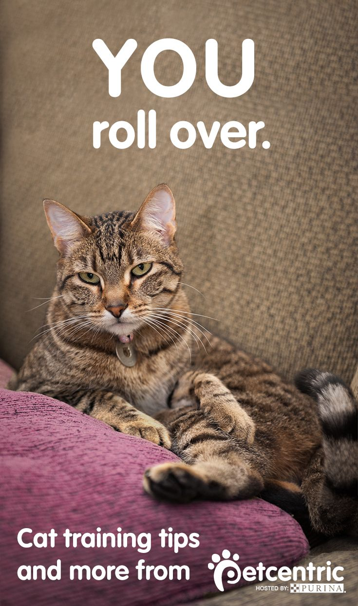 When training cats, it's easier said than done. Petcentric.com explains that feline friends respond better to verbal commands than they do actions. Discover more training tips that your entire family can join in on here.