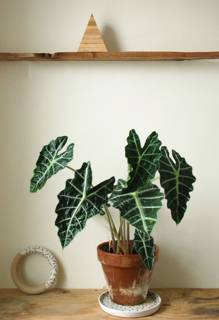 7 Plants That Won't Die on You, According to Recreation Center