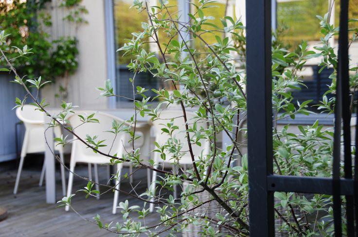 My garden in Sweden 117
