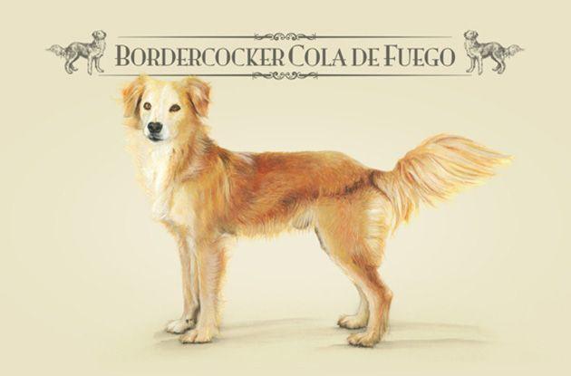 De Perros Callejeros a Razas Únicas   FuriaMag   Arts Magazine
