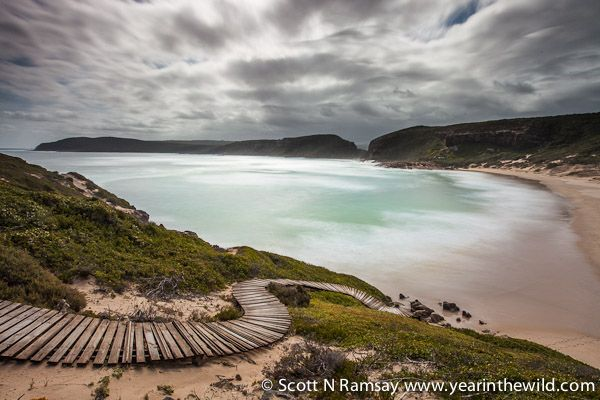 """Looking from """"the island"""" back towards Robberg Peninsula. A series of well contrusted boardwalks make hiking in the reserve a pleasure, for k..."""