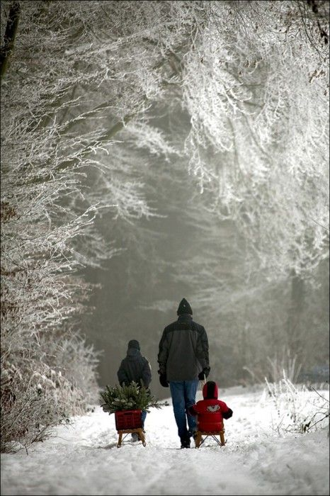 Christmas Cards, Winter Scene, Walks, Snow, Winter Wonderland, White Christmas, Families, Christmas Trees