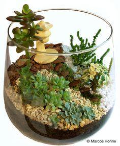 Minijardim | Jardins em Miniatura | Página 2                                                                                                                                                                                 Mais