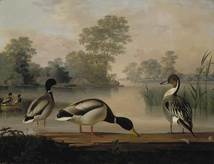 """""""Ducks"""" - """"Sorsia"""", 1853 – oil on canvas –   Magnus von Wright (1805-1868) -Ateneum- Magnuksen usein mainits.lintupaikka on Gloet,Kluuvinlahti(Töölönlahd.et.osa,joka jatk.nykyisen Ateneumin ohi,Espalle asti)Kluuvinlahd.oli ammuttu Suomen ensimm.harmaahaikaroita 1820-luv.,1840-luv.siellä oli ammuttu muuttoaik.heinäkurppa+siellä asusti luhtahuitti.Matala lahti täytett.myöh. Magnuksen päiväkirj.kertovat,että tämä ensimm.pääkaup.lintututkija retkeili myös Vanhassakaupungissa."""