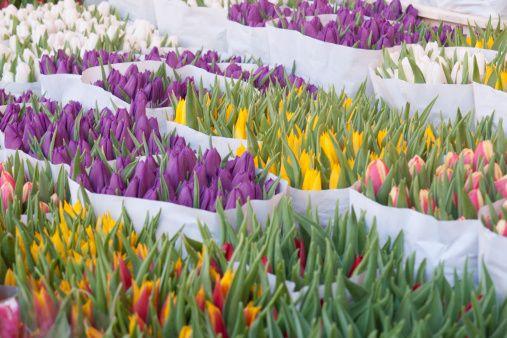 Immergersi nei mercati di fiori di tutto il mondo: è primavera! | Fito