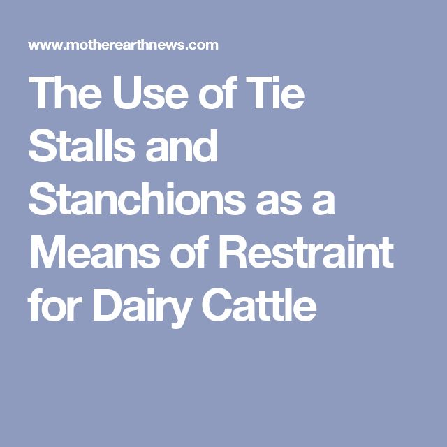 The Use of Tie Stalls and Stanchions as a Means of Restraint for Dairy Cattle