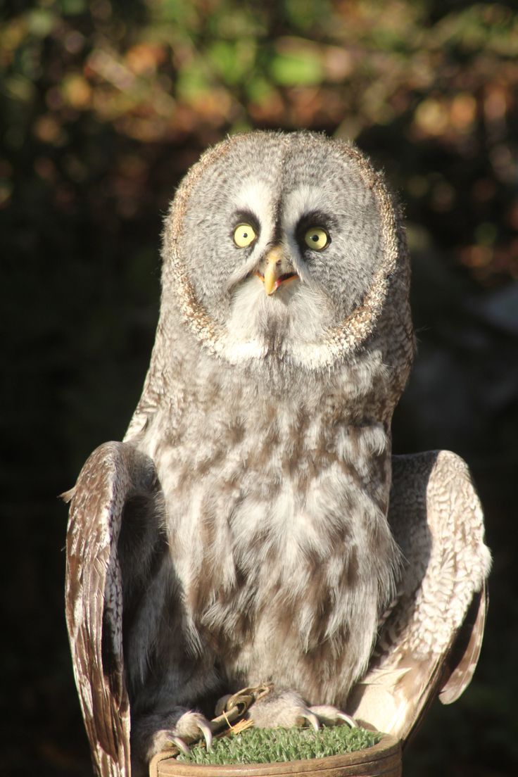 We have fabulous new team building packages from just £20 per person including bird of prey handling