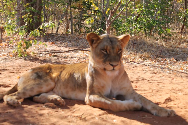 Mount Zion Tours and Travels offers you the ultimate Zambezi National Park safari in an unspoilt wilderness environment. Contact today!