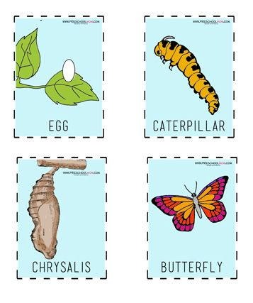 Our Butterfly Resources Are A Beautiful Addition To Your Thematic Unit Youll Find Printable ButterflyButterfly Life CyclePreschool