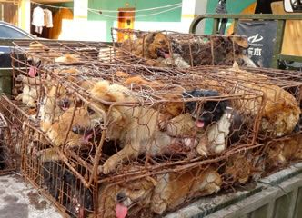 Take a stand against the Yulin dog meat festival (HSI petition) https://action.hsi.org/ea-action/action?ea.client.id=104&ea.campaign.id=20990&ea.tracking.id=email&ea.url.id=240904&ea.campaigner.email=u5eJALTLoQXDPj3qIMYyO%2FYck5tdu1JP&ea_broadcast_target_id=0
