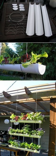 Rain Gutter Garden,So the slugs cant munch.Sorry guys...You know i share :)
