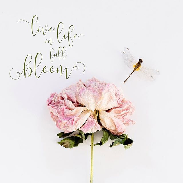 Floral Positive Motivational Quotes: 17 Best Images About Quotes