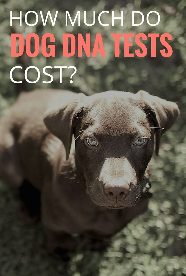 How much does a dog DNA test cost? We'll tell you what to expect for pricing!
