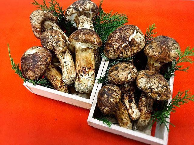 秋と言えば松茸も秋の代表的な旬の1つです。 松茸ご飯や土瓶蒸し、そのまま焼いても美味しく頂けますね。 料亭 梅彦 宮若市福丸216-1 営業時間 12時〜2時 5時〜7時 予約制  0949-52-0006 予約無し場合は遅れる事があります。 #和食 #料亭#梅彦#日本食#割烹#旬#野菜#魚#肉#博多#天神#ランチ#ご飯#宮若#北九州#福岡グルメ#弁当#料理好きな人と繋がりたい