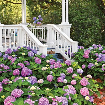 Redesign Your Hydrangeas | Try this simple trick to turn your hydrangeas pink, blue, or both. | SouthernLiving.com