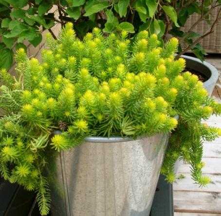 Best Potting Soil For Kitchen Herbs