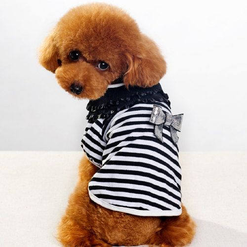 New Fashion lace stripe pet clothes/ dog clothes / puppy spring/summer outfit on Etsy, $13.99