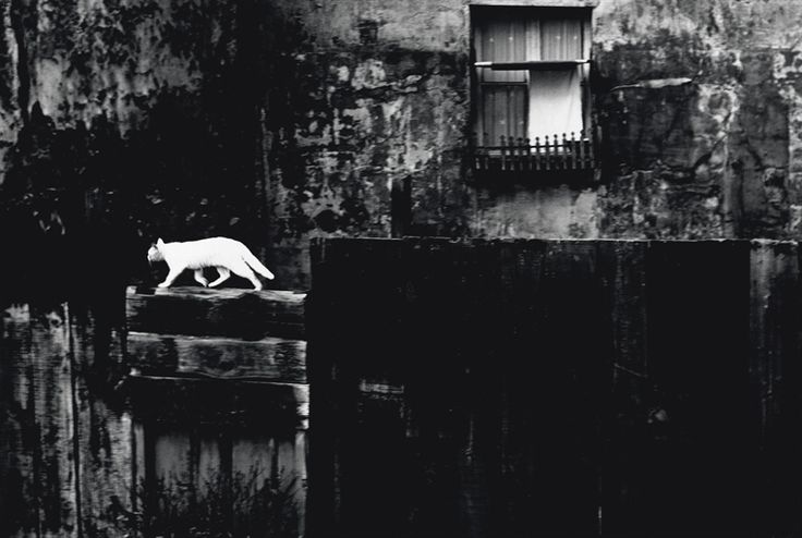 Piergiorgio Branzi: Parigi, Muro nero con gatto (Paris, black wall with cat), 1954.