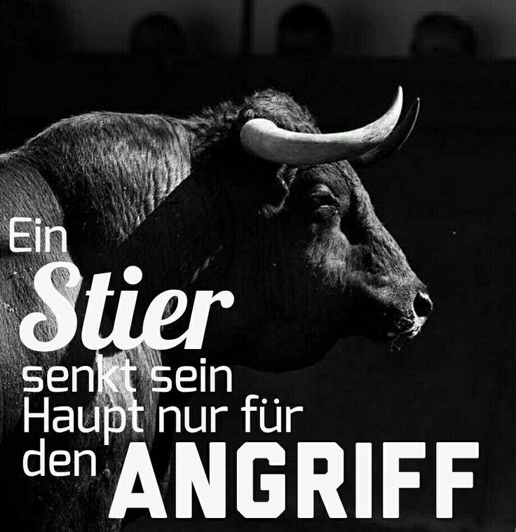 Ein Stier senkt das Haupt nur für den Angriff. #Stier #taurus #sternzeichen #zodiac