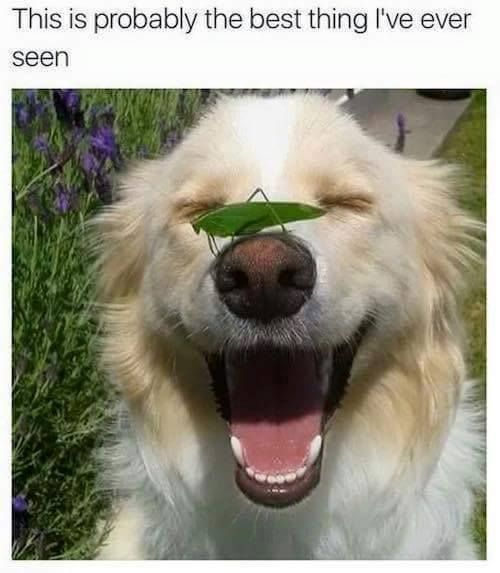 pup smiling with a grasshopper on his nose
