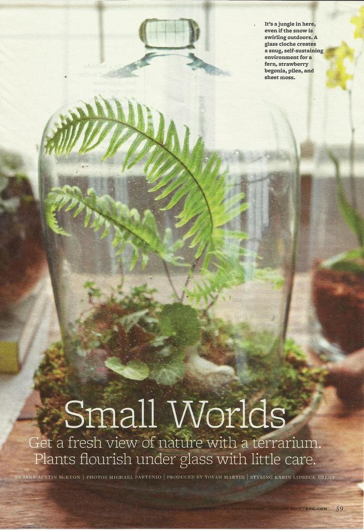 best terrariums images on Pinterest Succulents Terrarium plants