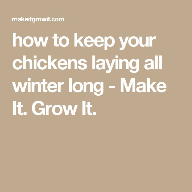 1000+ ideas about Chicken Laying Eggs on Pinterest | Backyard ...