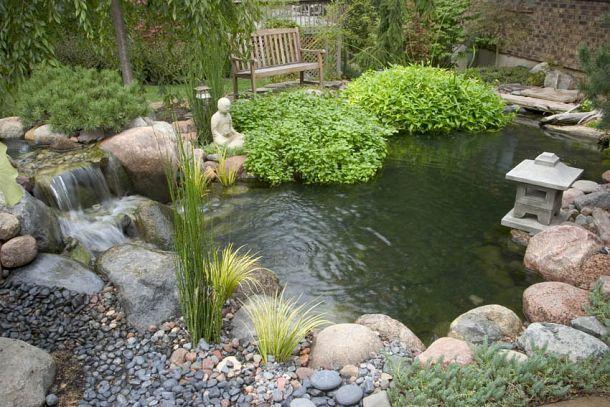 Small Water Gardens :: Hometalk