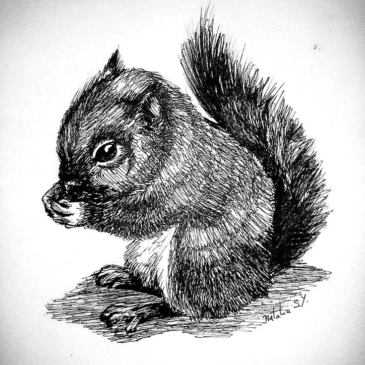 #squirrel #inkdrawing