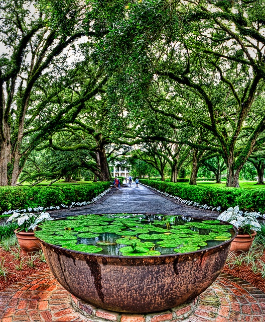 Oak Alley Plantation / Pond in the park at Oak Alley Plantation, Louisiana, USA