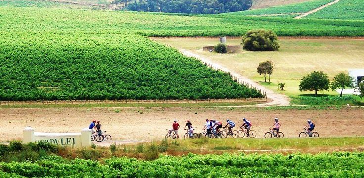 #MeetSouthAfrica: Explore the Cape vineyards with Bikes 'n Wines - http://buff.ly/1mYQhIO.