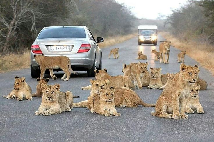 Just another day in the Kruger National Park                              … …