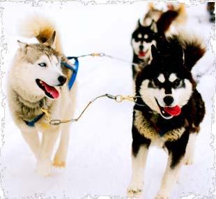 Dog Sledding in Alaska or Colorado.