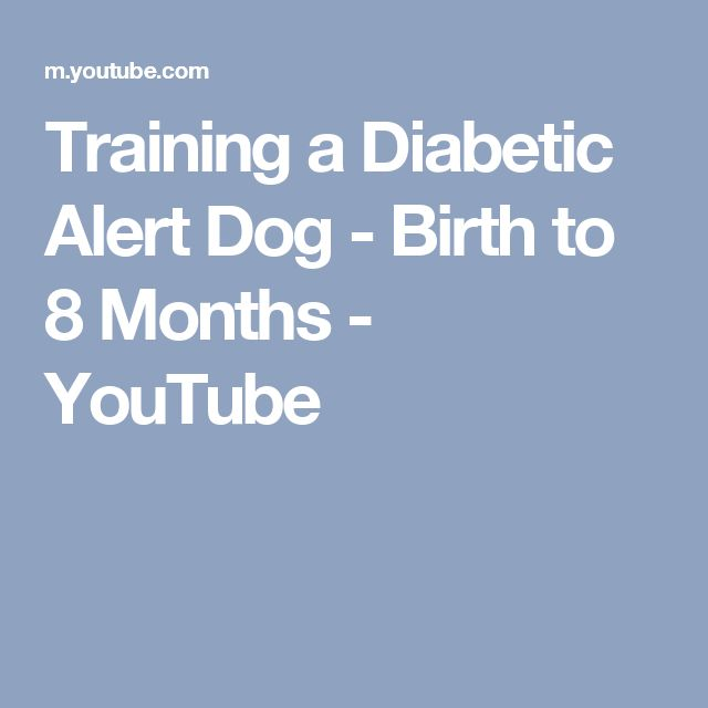 Training a Diabetic Alert Dog - Birth to 8 Months - YouTube