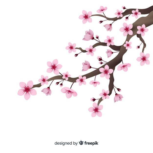 Download Realistic Cherry Blossom Branch Background For Free Cherry Blossom Drawing Cherry Blossom Art Cherry Blossom Branch