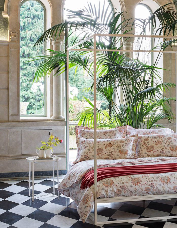 les 182 meilleures images du tableau plantes d 39 int rieur house plant sur pinterest elle. Black Bedroom Furniture Sets. Home Design Ideas