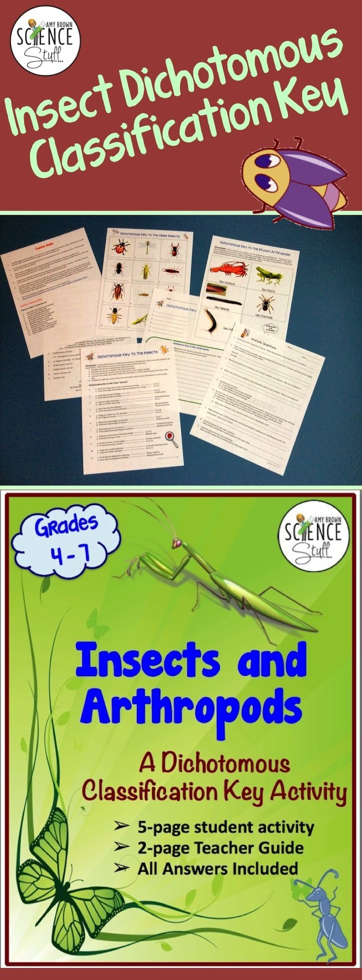 Fun dichotomous classification key activity on insects and arthropods.