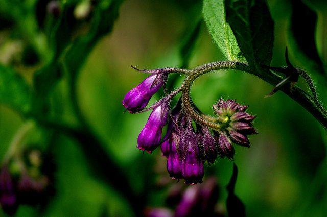 Spicegarden - La Tienda Online de Especias y Plantas Aromáticas
