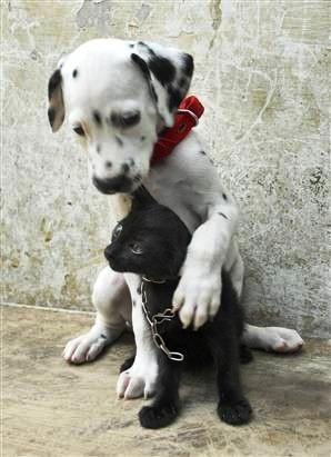 True love :) #dalmatian #dog #love https://www.facebook.com/DalmatiansForever