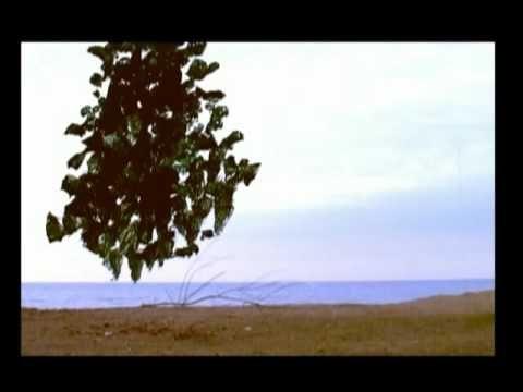 My Tree (short film)