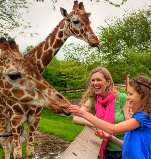 Indianapolis Zoo: 15 Best Indianapolis Zoo Images On Pinterest