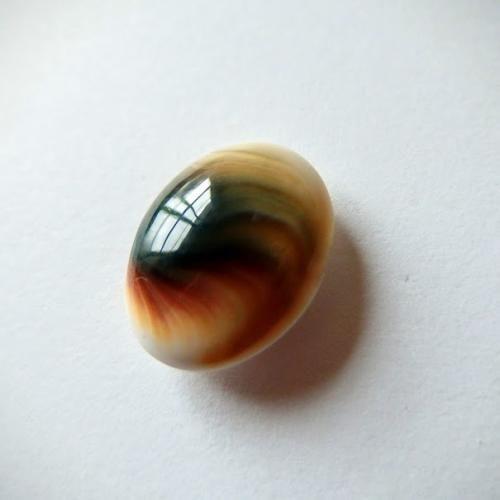 シヴァ・アイ シヴァ神の目 フォッシル・シェル 20cts./ ルース・カボション - 天然石・パワーストーンのルース、ペンダント、アクセサリー Stone marble