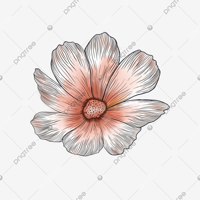 Watercolor Cosmos Flower Watercolor Flower Floral Png Transparent Clipart Image And Psd File For Free Download In 2020 Watercolor Flower Illustration Flower Illustration Watercolor Flower Background
