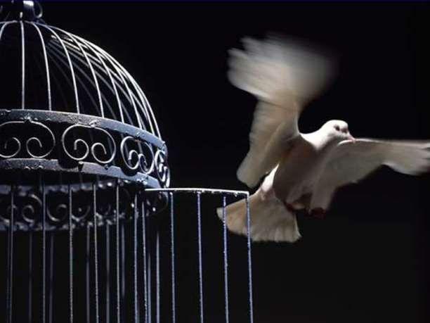 Κλουβί, ελευθερία περιστέρι συναισθήματα