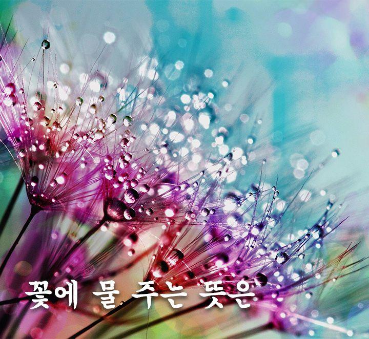 꽃에 물 주는 뜻은 가족 꽃 사진 편지 부부 행복 예술 2020 생각 꽃 사진