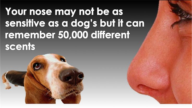 Do you have a doggie nose??... Our Did You Know series is not a quiz, or a test, it is just a fun fact of the day spruced up with high quality graphics. http://www.scientificanimations.com/did_you_know/do-you-have-doggie-nose/ #ScientificAnimations #DidYouKnow #ThursdayDidYouKnow #Scents