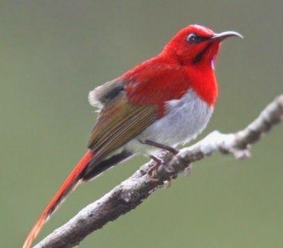 Beberapa jenis Burung Kolibri (burung madu) si kecil yang cantik, gesit dan merdu.